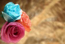 Free Three Roses Stock Image - 1776051