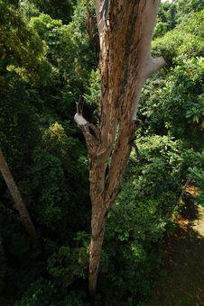 Free Tall Tree Royalty Free Stock Photography - 1777467