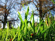 English Meadow Stock Photos