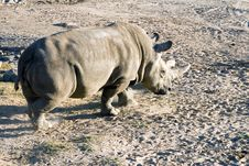 Free White Rhinoceros Stock Photography - 1778752
