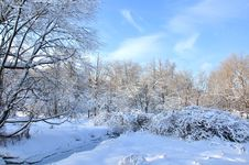 Free Winter Forest. Stock Photography - 17702212