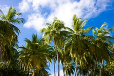 Free Palms On A Background Sky In Tropics Royalty Free Stock Photography - 17703447