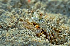 Free Ghost Crab Royalty Free Stock Photos - 17706538