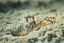 Free Ghost Crab Stock Photos - 17706553