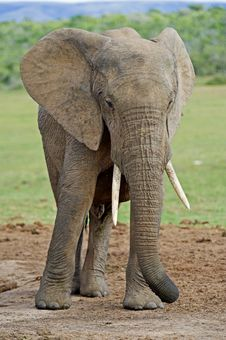 Free Summer Elephant Stock Photos - 17707043