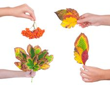 Free Autumn Leaves On A Female Hand, Isolated Royalty Free Stock Images - 17709119