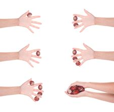 Free Female Hand With Chesnuts, Isolated Stock Image - 17709161