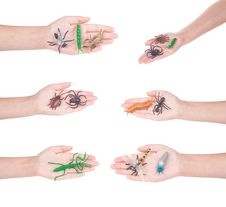 Free Insects In A Female Hand, Isolated Royalty Free Stock Image - 17709236