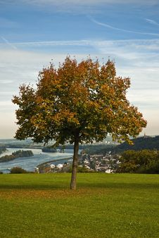 Free Autumnal Tree Stock Photos - 17709353