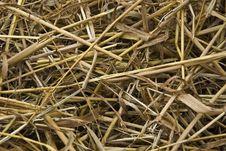 Free Straw Royalty Free Stock Photo - 17709545