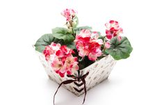 Free Present Packaging With Geraniums Stock Photos - 17709643