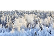 Free Snowy Forest Royalty Free Stock Image - 17709946