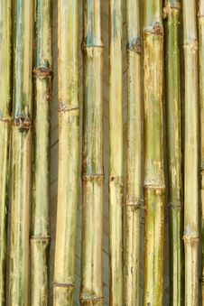 Shiny Bamboo Wall Stock Photos