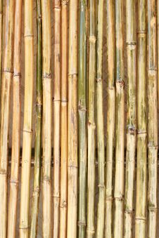 Shiny Bamboo Wall Stock Images