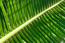 Free Coconut Leaf Royalty Free Stock Photography - 17712547