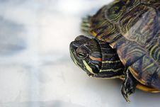 Free Tortoise Stock Image - 17713351