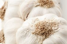 Free Garlic Royalty Free Stock Image - 17713416