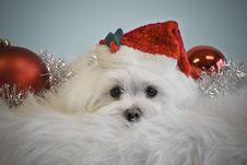 Santa Dog Stock Photo