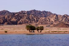 Free Oasis On The Desert Coast Stock Photography - 17714192