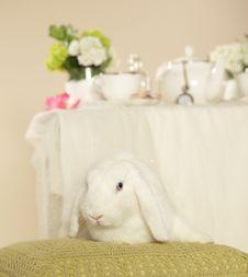 Free White Rabbit Royalty Free Stock Photos - 17715118