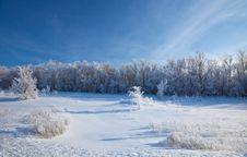 Free Sunny Winter Day - Winter Forest. Stock Image - 17716611