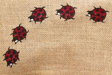 Free Ladybird Horizontal Stock Image - 17716731