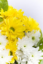 Free Carnation Bouquet Flowers Stock Photography - 17723992