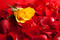 Free Red Roses Petals Valentine S Day Stock Photography - 17728152