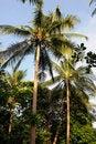 Free Palm Tree Royalty Free Stock Photo - 17728335
