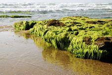 Free Sea Coast Royalty Free Stock Image - 17721196