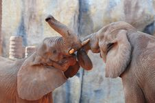 Elephant In Love Royalty Free Stock Photography