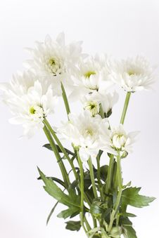 Free White Carnations With Green Stems Royalty Free Stock Images - 17724029