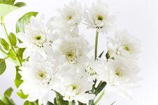 Free White Garden Carnations Freshly Cut Stock Photo - 17724040
