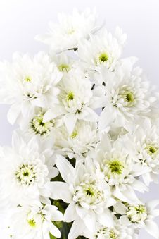 Free Bunch Of White Carnation Bouquet Flowers Stock Images - 17724044