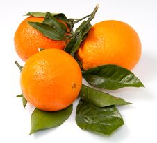 Free Orange Stock Image - 17724221