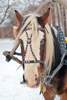 Free Horse Harnessed To A Sled Stock Photography - 17725232