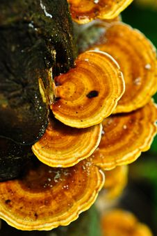 Free Fungus Mushrooms At Phaghan Island Stock Photo - 17725450