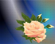 Free Pink Rose Royalty Free Stock Photo - 17725615