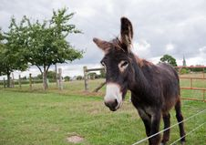 Free Donkey In A Field Royalty Free Stock Photos - 17726888