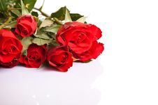 Free Red Roses On White Isolated Background Stock Image - 17727151