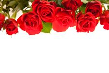 Free Red Roses On White Isolated Background Stock Image - 17727161
