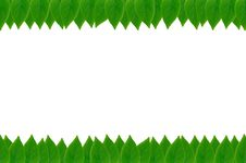Free Green Leaves Frame Stock Photo - 17727320