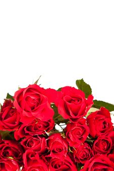 Free Red Roses On White Isolated Background Stock Photos - 17727613