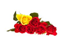 Free Valentine S Day Red Roses Isolated Royalty Free Stock Images - 17727779