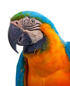 Free A Blue And Yellow Macaw Stock Photography - 17728382