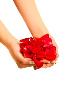 Free Red Rose Petals In Woman S Hand Isolated Royalty Free Stock Photos - 17728548