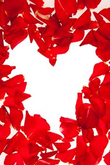 Free Red Rose Petals Isolated Stock Photos - 17728733