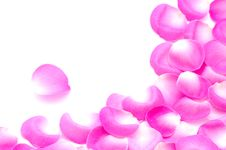 Free Rose Petals Royalty Free Stock Photo - 17729045