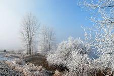 Free Frosty, Misty Morning Stock Photography - 17729912
