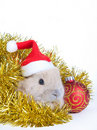 Free Brown Rabbit And Christmas Decoration, Isolated Stock Images - 17731134